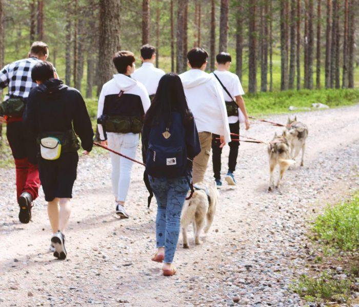 Husky Park, Summer, Husky Hiking, Husky safari, Rovaniemi, Santa Claus Village