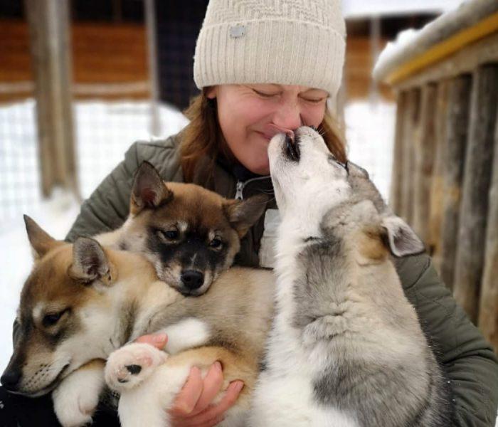 Husky Park, Husky Hugging, Winter, Husky safari, Rovaniemi, Santa Claus Village