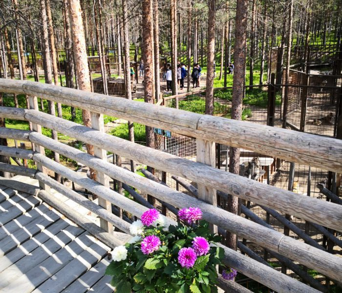 Husky Park, Husky safari, Rovaniemi, Santa Claus Village